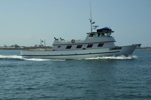 Condor sportfishing san diego ca for Fishing in san diego