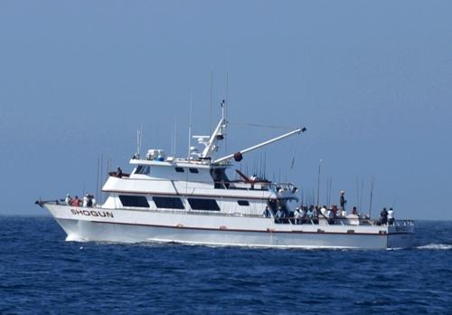 Shogun sportfishing san diego ca for Fish counts san diego