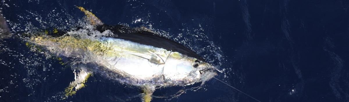 Fisherman's Landing: San Diego, CA Fishing Charters